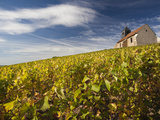 Town Church and Vineyards, Mutigny, Champagne Ardenne, Marne, France Photographic Print by Walter Bibikow