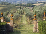 Vineyards, Tuscany, Italy Photographic Print by Adam Jones