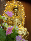 Pink Lotus Flowers in Front of Gold Statue, Kek Lok Si Temple, Island of Penang, Malaysia Photographic Print by Cindy Miller Hopkins