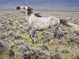 Wild Horse, Wyoming, Usa Photographic Print by Larry Ditto