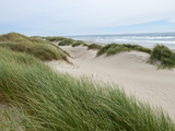 Sand Dunes and Scrub in Oregon Dunes National Recreation Park in Florence, Oregon, Usa Photographic Print by Bill Bachmann