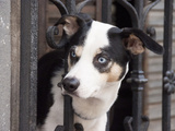 Dog on a Balcony, Quarter San Telmo, Buenos Aires, Argentina Photographic Print by Jutta Riegel