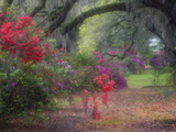 Spring Azaleas in Bloom at Magnolia Plantation and Gardens, Charleston, South Carolina, Usa Valokuvavedos tekijn Joanne Wells