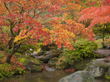 Japanese Garden, Washington Park Arboretum, Seattle, Washington, Usa Photographic Print by Jamie & Judy Wild