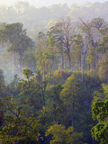 Sulawesi Tangkoko Rainforest, Sulawesi Photographic Print by Connie Bransilver