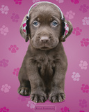 Kimberlin-Chocolate Lab Head Photographie