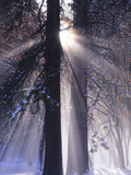 Rising Sun, Yosemite Valley, Yosemite National Park, Sierra Nevada, California Photographic Print by Christopher Bettencourt
