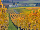 Stoller Vineyard, Dundee, Yamhill County, Willamette Valley, Oregon, Usa Photographic Print by Janis Miglavs