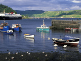 Harbor and Caledonian-Macbrayne Ferry, Oban, Scotland Photographic Print by Bill Sutton