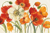 Poppies Melody I Kunstdruck von Lisa Audit