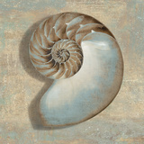 Aqua Nautilus Art by Caroline Kelly