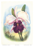 Hawaiian Orchid, Airbrush, c.1940s Prints by Ted Mundorff
