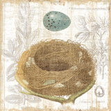 Botanical Nest III Art by Moira Hershey