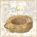 Botanical Nest I Prints by Moira Hershey