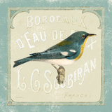 Parisian Bird I Prints by Sue Schlabach