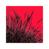 Grass (red), c.2011 Premium Giclee Print by Davide Polla