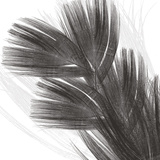 Plumes I, c.2008 Premium Giclee Print by Anne Montiel