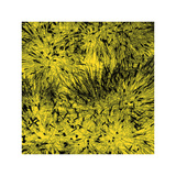 Grass (yellow), c.2011 Premium Giclee Print by Davide Polla