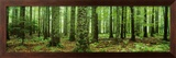 Rain Forest Prints