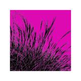 Grass (magenta), c.2011 Premium Giclee Print by Davide Polla