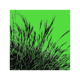 Grass (green), c.2011 Premium Giclee Print by Davide Polla