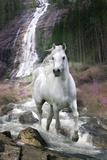 Bob Langrish foto, wit paard voor waterval Poster
