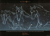 No More Night Mares Horses in Stars Art Print Poster Posters
