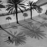 Palms on the 'Quai Des Etats Unis' in Nice, 1932 Photographic Print by Scherl