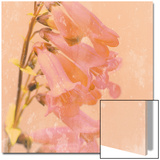 Romantic Foxglove Poster von Lambert 
