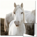 Horse Kunst av  Llovet