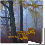 Autumn Forest Kunstdrucke von Strand 