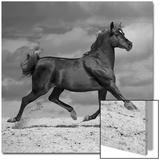 Black Horse Plakater av  Llovet