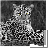 Leopard Portrait Prints by  Ortega