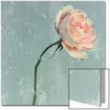 Romantic Pink Rose Prints by Lambert