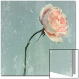 Romantic Pink Rose Poster by Lambert 