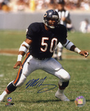 Mike Singletary Chicago Bears Action Autographed Photo (Hand Signed Collectable) Photo