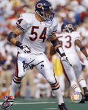Brian Urlacher Chicago Bears Autographed Photo (Hand Signed Collectable) Photo