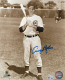Andy Pafko Chicago Cubs Autographed Photo (Hand Signed Collectable) Photo