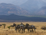 Zebras at the Nechisar National Park, Ethiopia, Africa Photographic Print by Michael Runkel