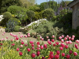 Abbey Gardens, Tresco, Isles of Scilly, United Kingdom, Europe Photographic Print
