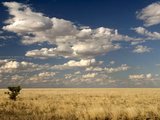 The Dead-Flat Grasslands of the Barkly Tablelands, Northern Territory, Australia, Pacific Photographic Print by Tony Waltham