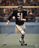 Dick Butkus Chicago Bears Action Autographed Photo (Hand Signed Collectable) Photo