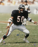Mike Singletary Chicago Bears Autographed Photo (Hand Signed Collectable) Foto