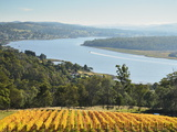 River Tamar, Tamar Valley, Tasmania, Australia, Pacific Photographic Print by Jochen Schlenker