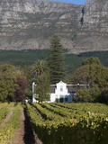 Buitenverwachting Wine Farm, Constantia, Cape Province, South Africa, Africa Photographic Print by Sergio Pitamitz