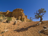 Sandstone Cliffs of Claron Formation, Pink Ledges Trail, Red Canyon, Utah, USA Photographic Print by Neale Clarke