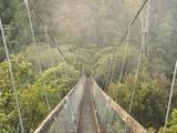 Swingbridge, Motu Falls, Motu, Gisborne, North Island, New Zealand, Pacific Fotografisk tryk af Jochen Schlenker