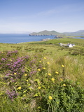 Valentia Island, Ring of Kerry, County Kerry, Munster, Republic of Ireland, Europe Photographic Print