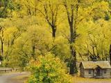 Miner's Cottage, Arrowtown, Otago, South Island, New Zealand, Pacific Photographic Print by Jochen Schlenker