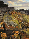 Lichen Covered Rocks, Shore at Greens Beach, Tasmania, Australia, Pacific Photographic Print by Jochen Schlenker